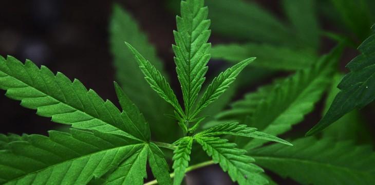 The Relationship Between Reggae & Marijuana